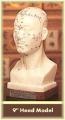 Head Acupuncture Model 9