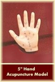 Hand Acupuncture Model 5